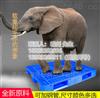 川字塑胶托盘垫仓板卡板